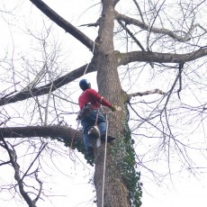 tree service johns creek ga