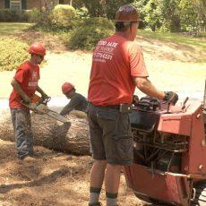 tree removal marietta ga