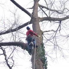 tree service johns creek ga